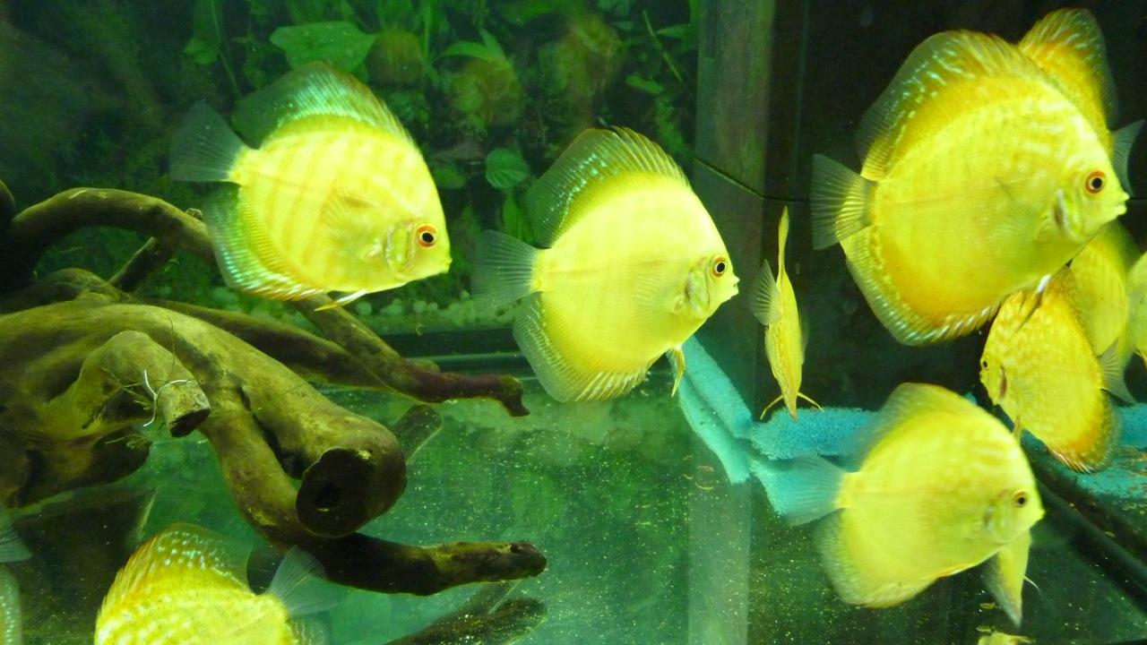 Über die Jungfische | Scholle hochkant