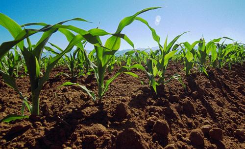 Recursos naturales estrategicos los recursos naturales de for Recurso clausula suelo