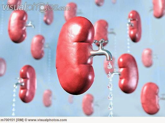 heart to pump | buy mifepristone online in affordable rate, Skeleton