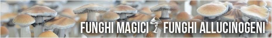 Funghi Magici - Funghi Allucinogeni