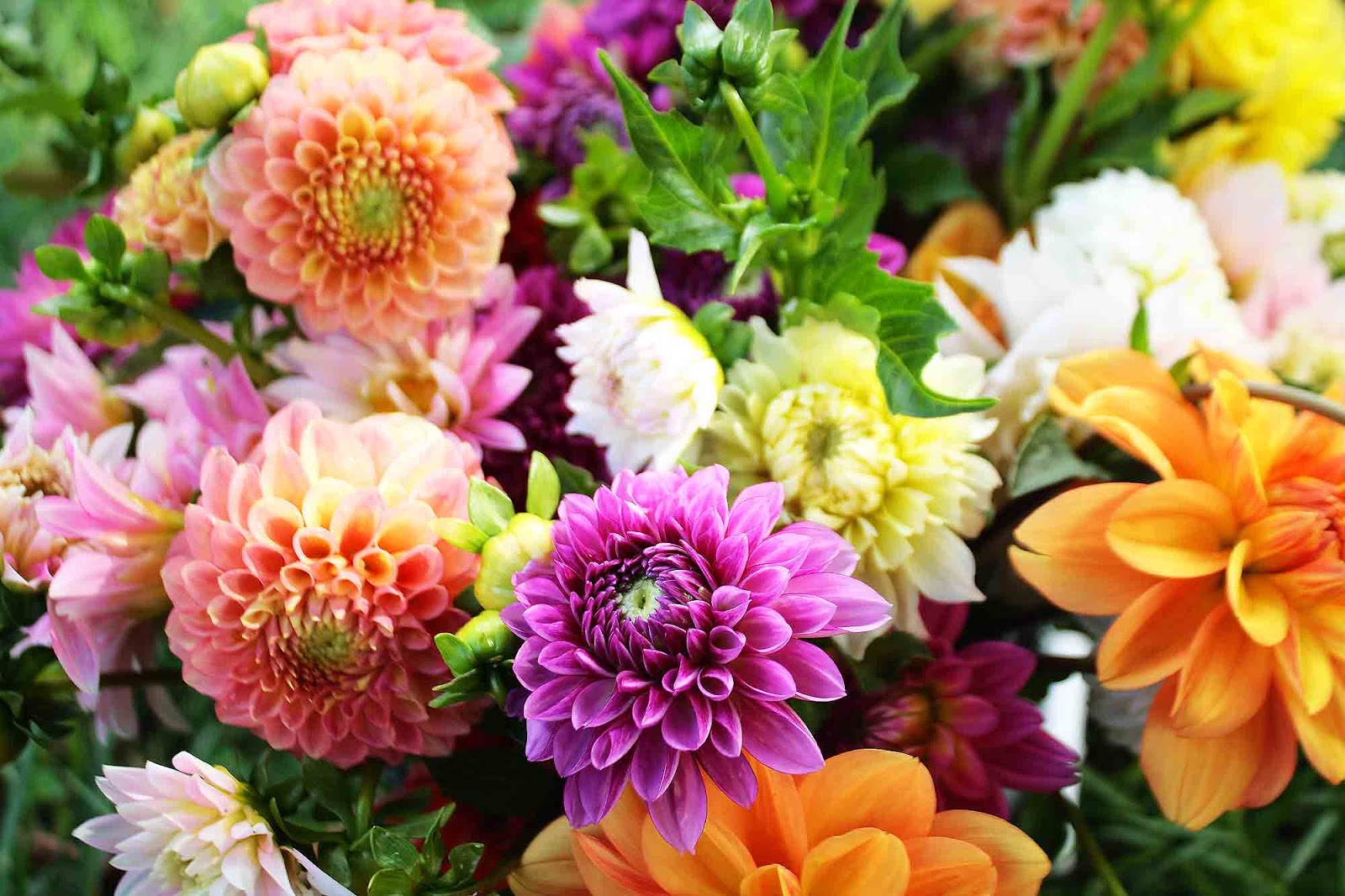 Beautiful Fresh Flower...