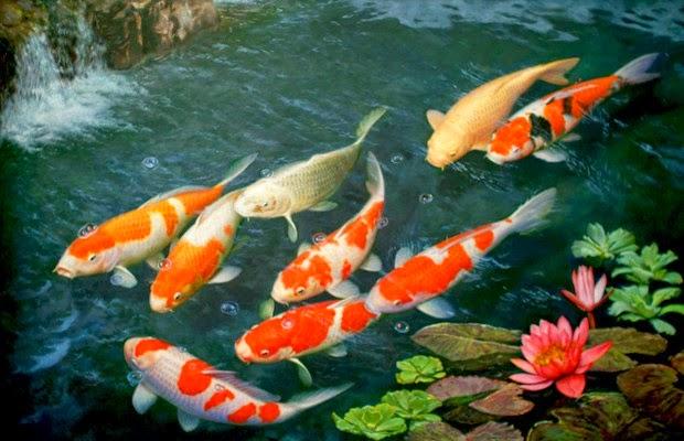 Como fazer um lago artificial para peixes no jardim for Como criar peces koi