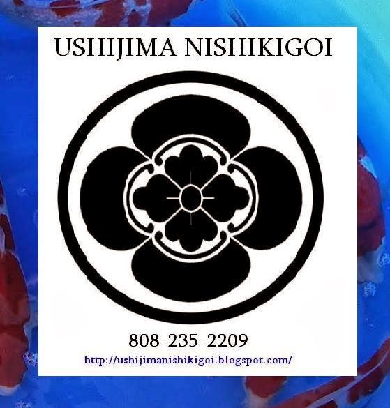 Ushijima Nishikigoi
