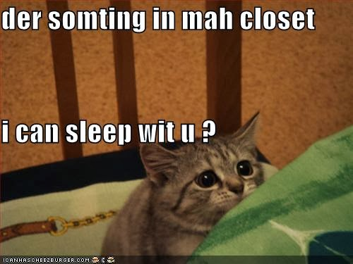 Funny Cats With Words Nice Pics Gallery