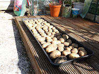Drying Potatoes For Storage