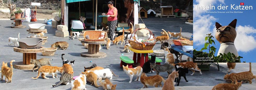 Malta - Inseln der Katzen