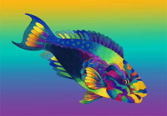 Most amazing rainbow parrot fish for Rainbow parrot fish