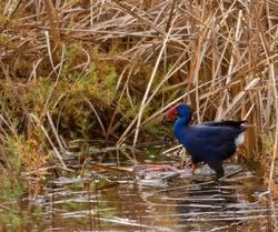 http://www.rutadelaplata.com/es/8117-habitats-ruta-ornitologica-brazo-del-este