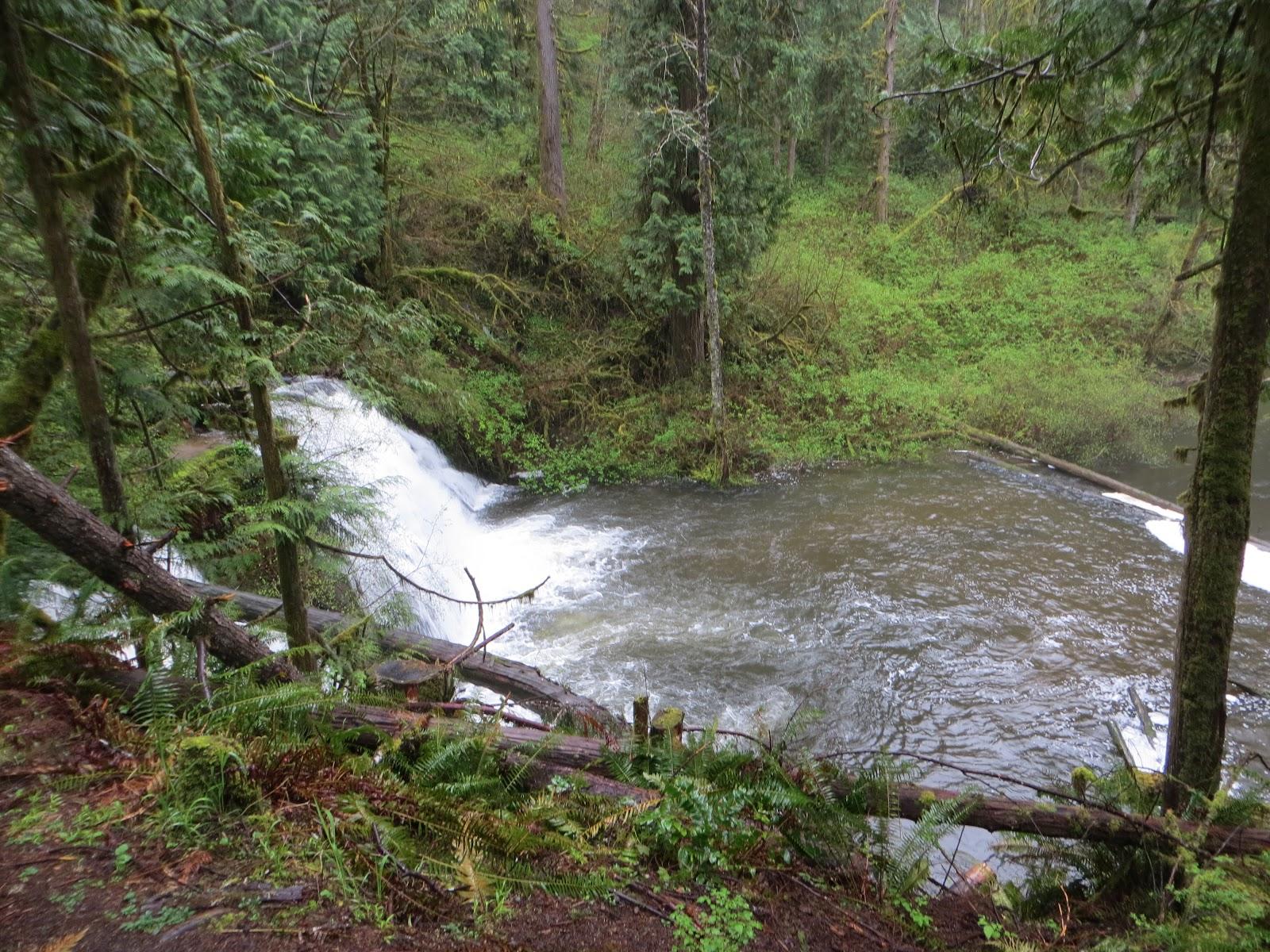 My pacific northwest cherry creek falls 4 21 13 for Cherry creek