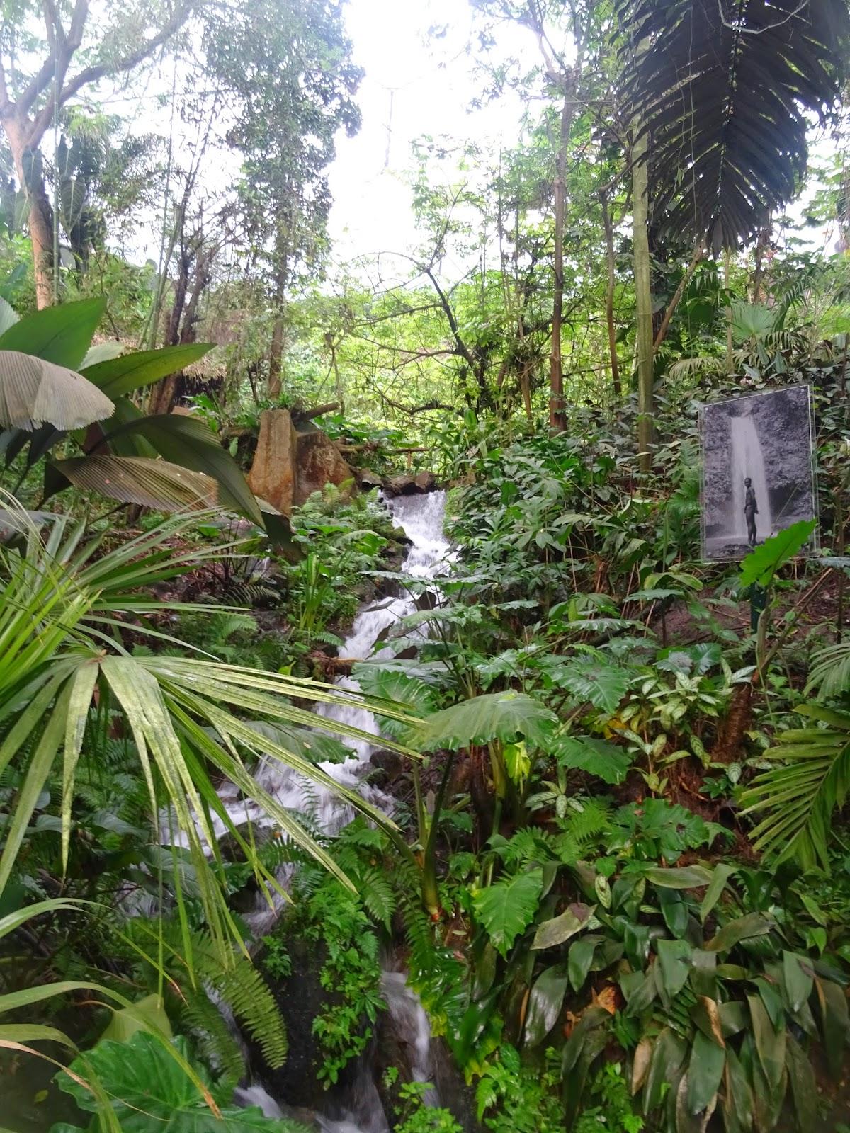 Plants  Tropical Rainforest Biome