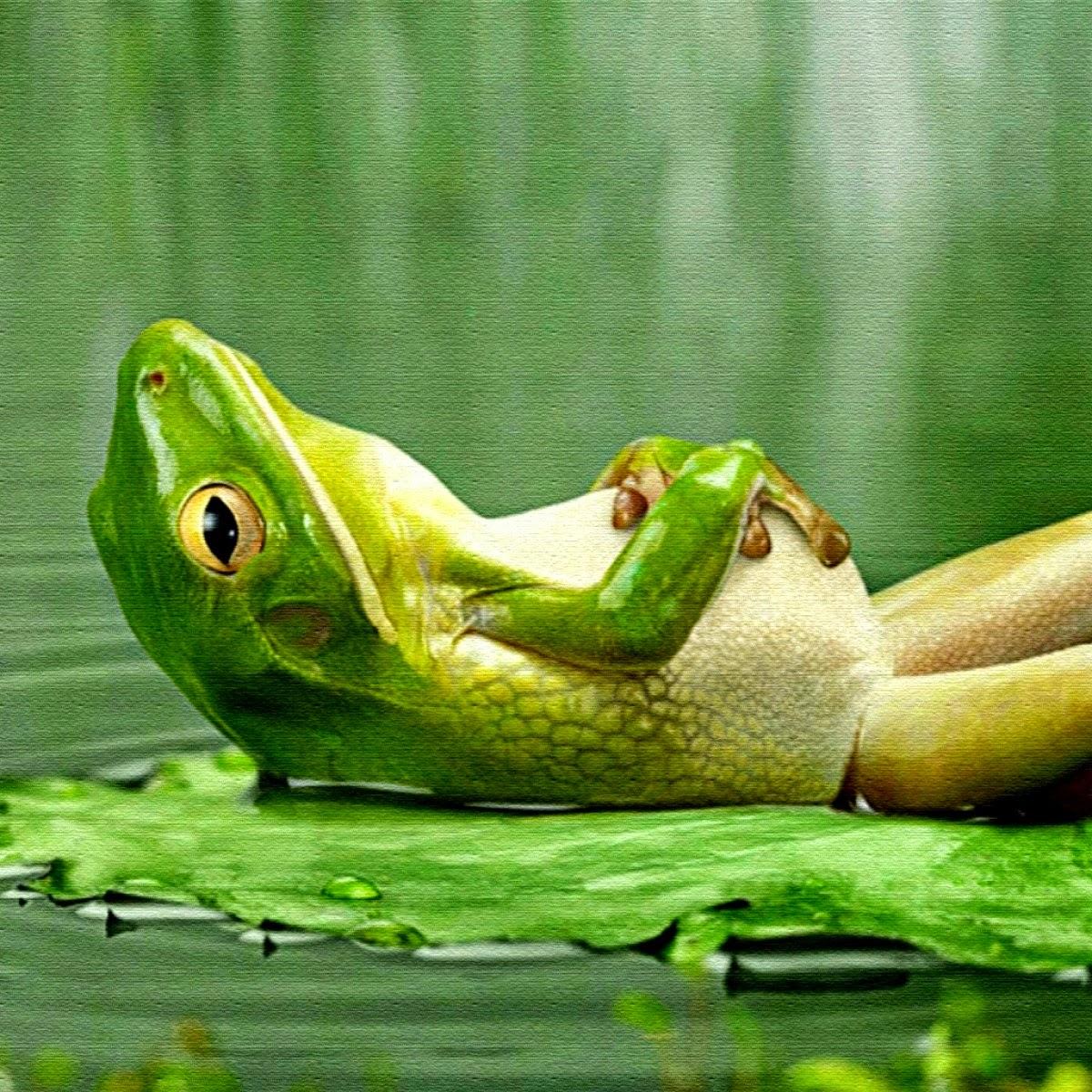 livia u0027s microcosmos frog