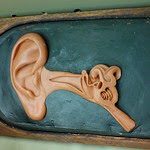 Ear and ear drum.