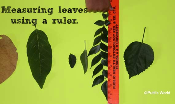 learning with leaves