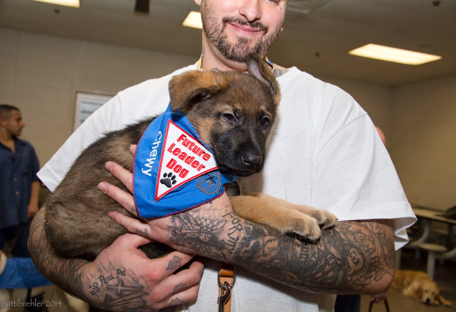 "A man is standing, facing hte camera and holding a small german shepherd puppy. The upper part of his face is out of the frame, but he is smiling, he has a light beard. He is holding the puppy with his arms and they are filled with tattoos. The puppy is wearing a blue bandana with a white triangle patch with red words that say Future Leader Dog and a black paw print. Embroidered on one side of the bandana is the word ""Chewy"" in white letters. Opposite is a picture embroidered of Chewbaca, from the movie Star Wars. There is another man in the background on the left against the far wall looking toward the right. Also in the background on the right side at the bottom of the photo is a golden retriever lying on the floor looking at the camera like it is bored."