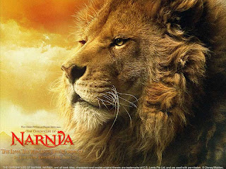 lion king  picture wild animal wallpaper tiger big cat species