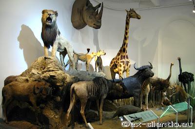 imagini muzeul antipa 11