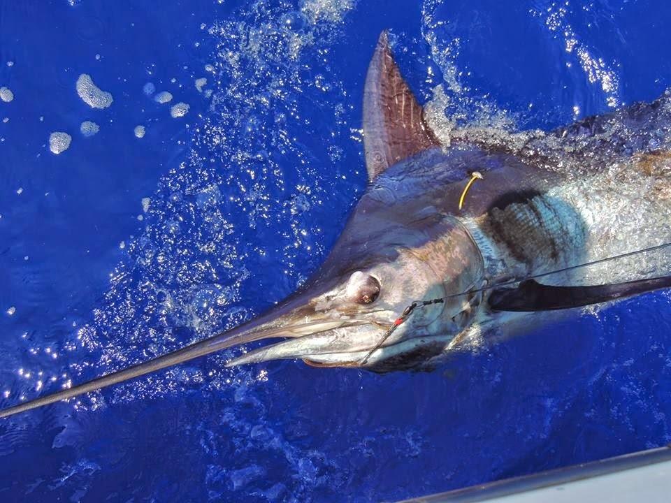 fa76fc24a22b Maui Fishing Charters - Today s Fresh Catch  Rascal Fishing Charters