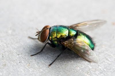 Inilah Alasan Mengapa Lalat Sulit Dipukul