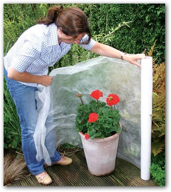 Interes general en f0rma de b1ts como cuidar las plantas - Plantas de frio y calor ...