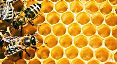 Мёд, пчелы и здоровье