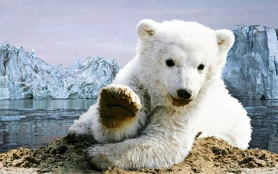 Eisbären-Baby Knut