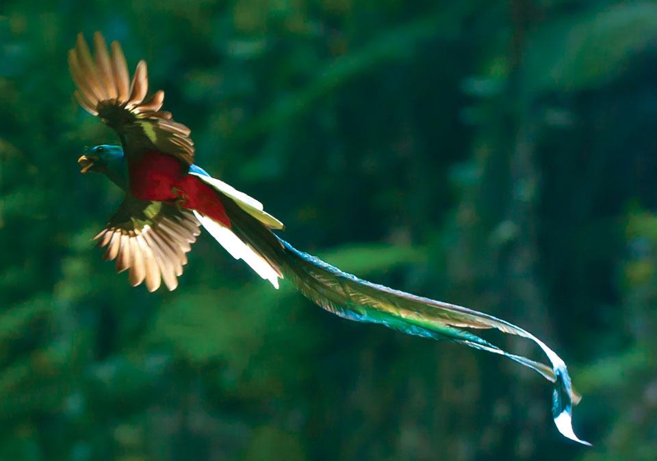 http://1.bp.blogspot.com/-XNpxpZBXm0A/UiBl5RXbBuI/AAAAAAAAGbE/DxzJYfA6TLs/s1600/Quetzal-bird-pic-0.jpg