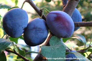 benefits_of_eating_plums_fruits-vegetables-benefits.blogspot.com(benefits_of_eating_plums_10)