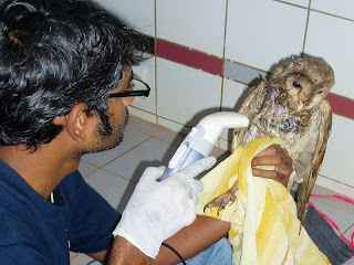 owl rescue goa