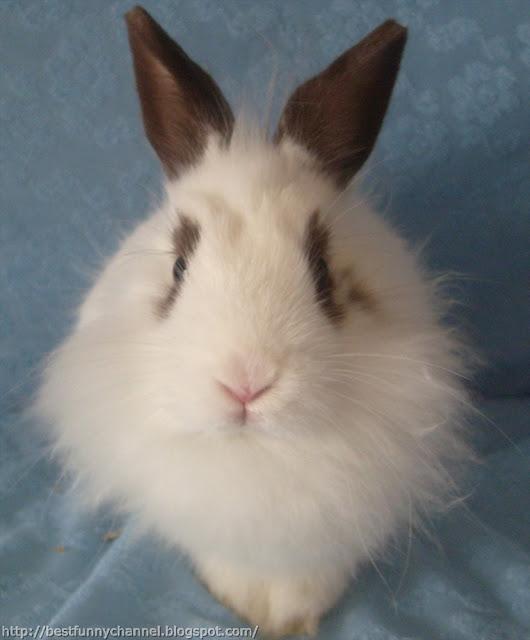 Very nice bunny.