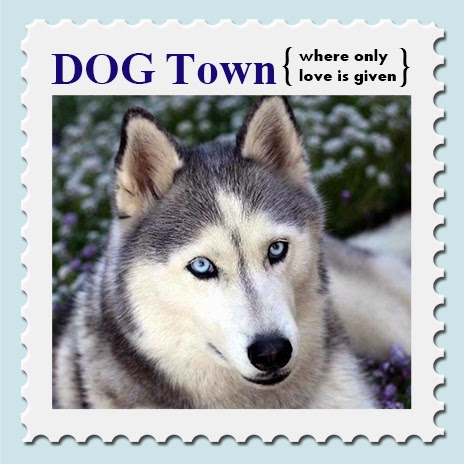 Dog text love design blue eye