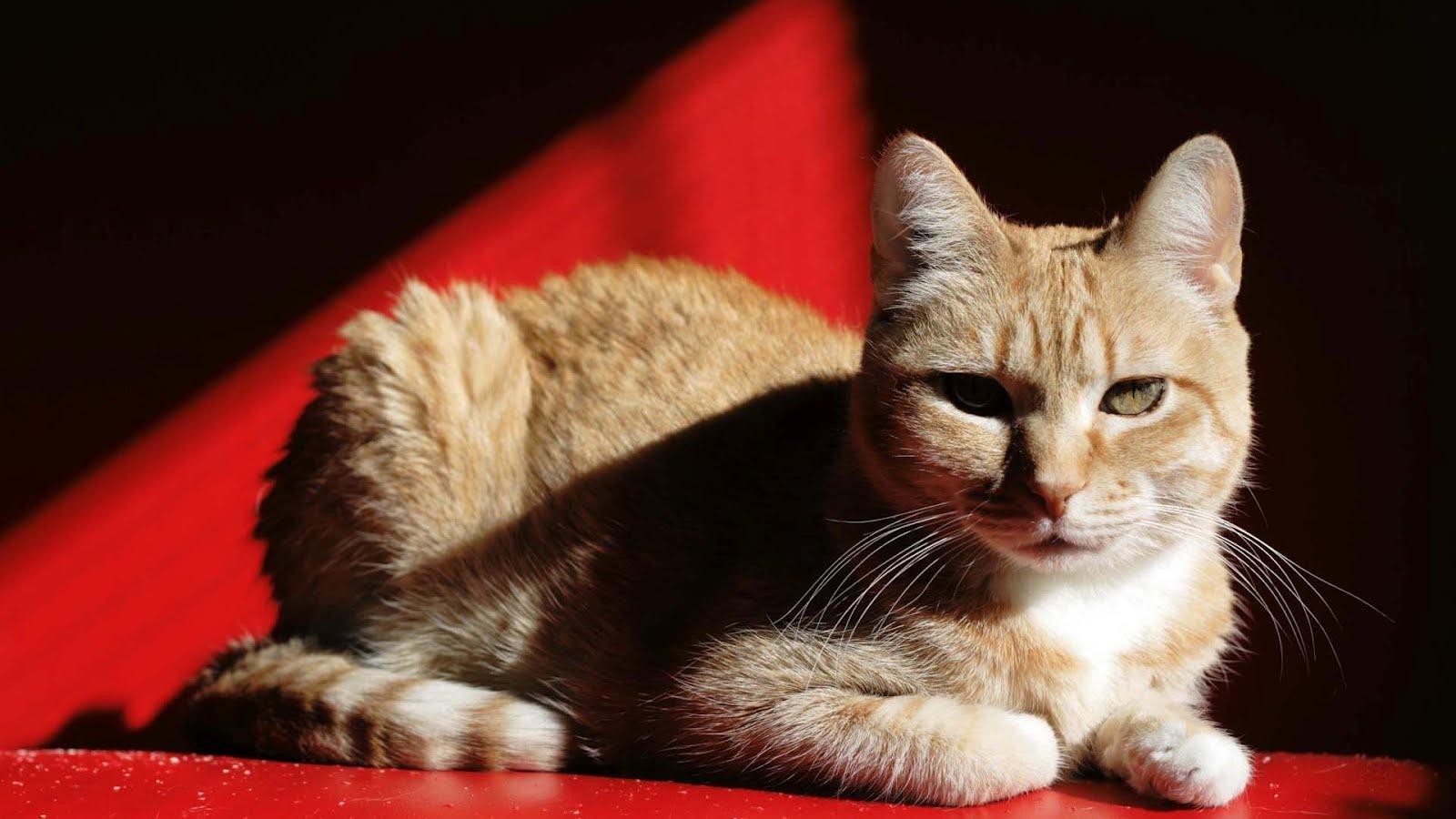 http://1.bp.blogspot.com/-XOT6VHADZUE/T54s7p-OxfI/AAAAAAAAIm4/bwL5a-mUsPM/s1600/Cats-Wallpapers.jpg