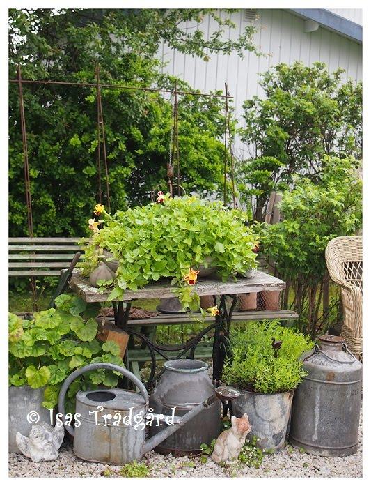 Gyckelblomster i köksträdgården