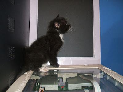 imagen mascota tierna gatito