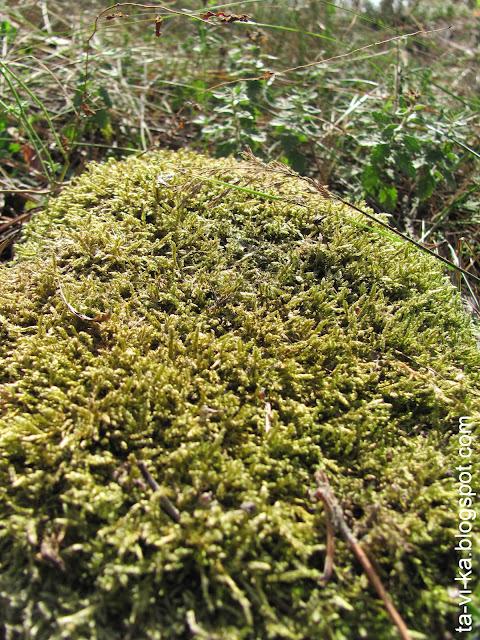 мох на камне