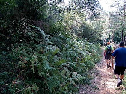 Caminant entre falgueres a la Baga de Serratacó