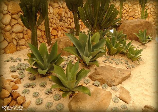 pedras de jardim quanto custa ? Doitri.com