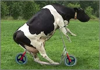 http://1.bp.blogspot.com/-XPd0JnrHTIg/TiYb24Vm3ZI/AAAAAAAAG4I/ZqGSvAmTmIg/s400/Funny+Bikes+%2528bike-bikes-wallpaper.blogspot.com%2529+%2528131%2529.jpg