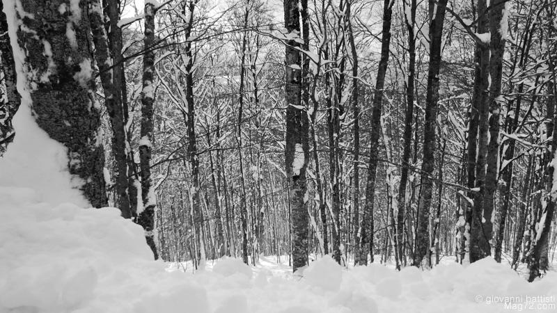 Panasonic TZ70, foto di esempio. Foresta in bianco e nero