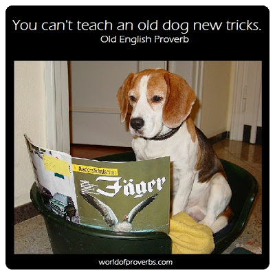 teaching an old dog new tricks Graphite 11: teaching an old dog new tricks published: 11 jan 2018 by dan cech rss the road to graphite 11 i started working on graphite just over a year ago.