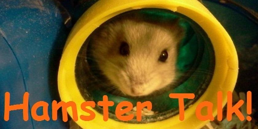 Hamster Talk!