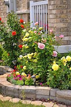 Landscaping Ideas with Rose Bushes