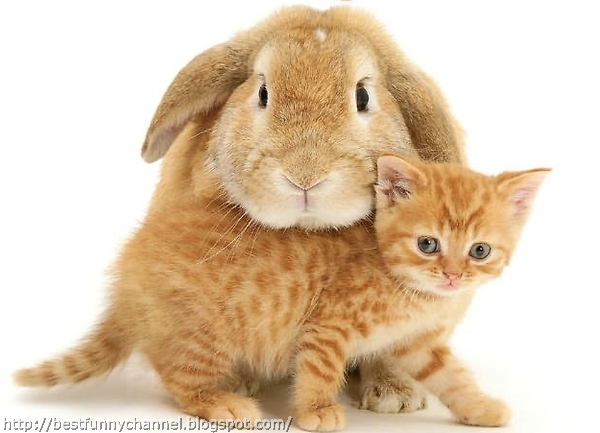 Bunny and kitten.
