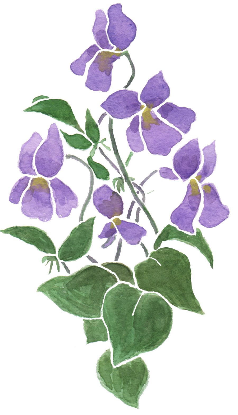 Judy Adamsons Art Design Blog Primroses And Violets For A