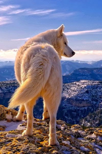 Siberian Huski BY ~ Rafael Tamajón