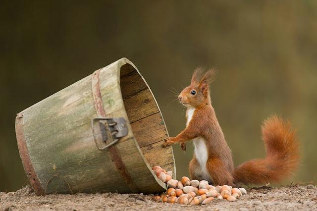 Lindas criaturas jugueteando alrededor de los bosques de Holanda
