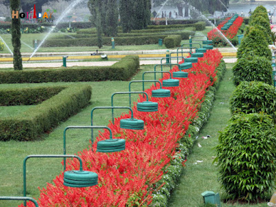 Flower beds in Mysore Brindavan gardens