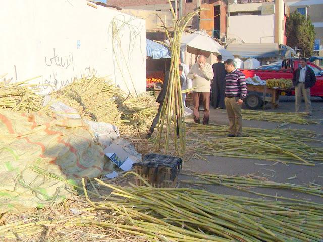 Frisches Zuckerrohr auf einem Makt in Ägypten