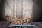lire---rêver
