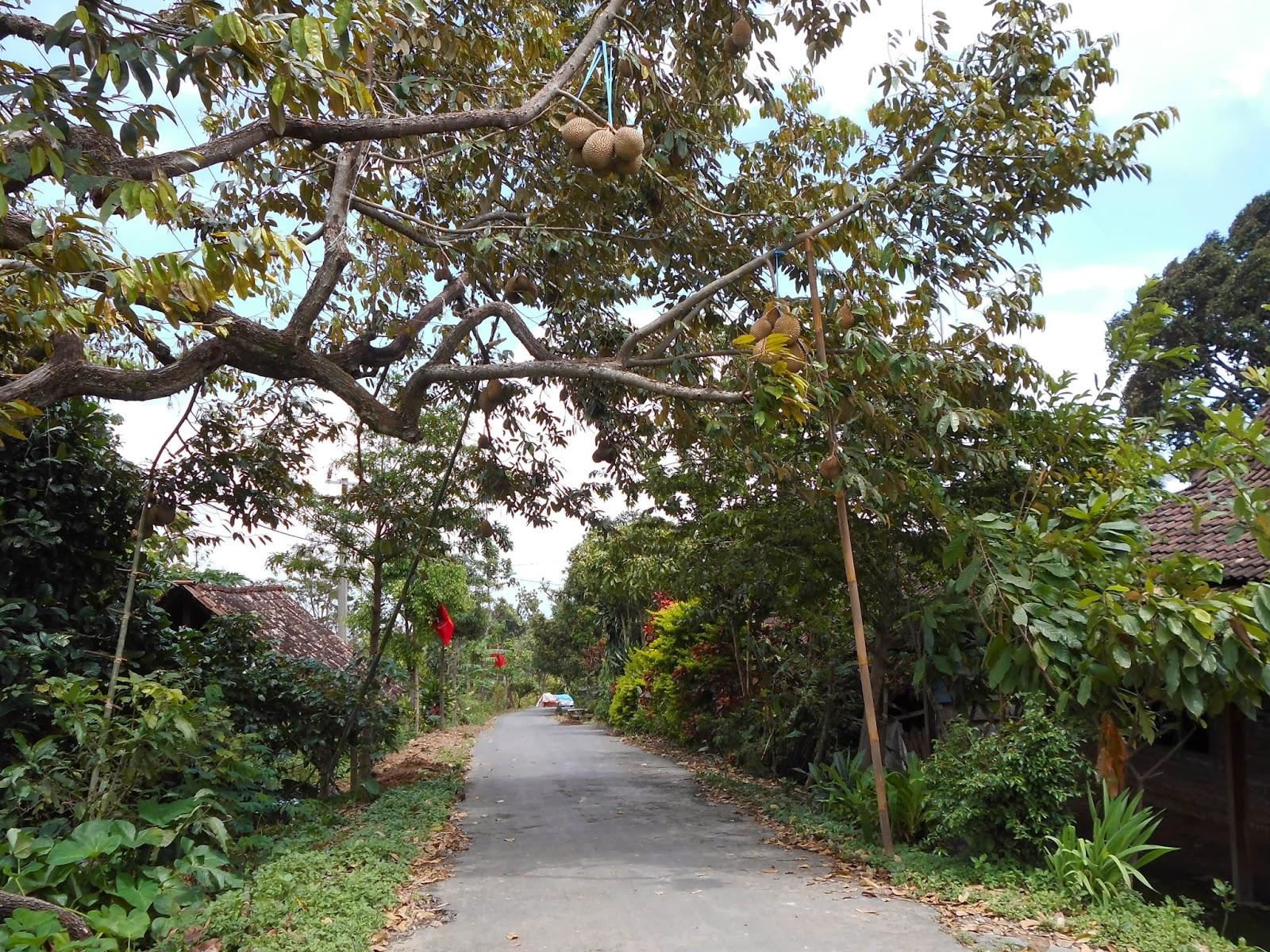 durian unggulan