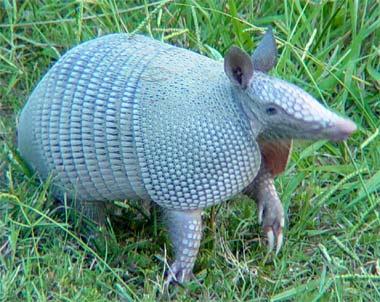 Zoologico de Chapultepec: Animales en peligro de extinción